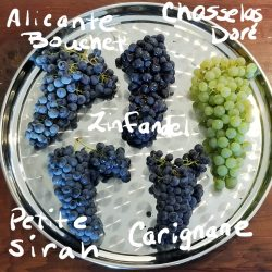 Different grapes labeled on plate