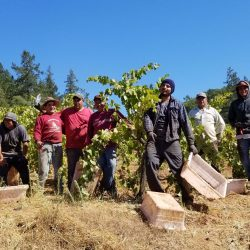 workers at the vines