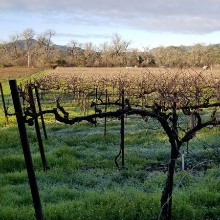 Burton vines