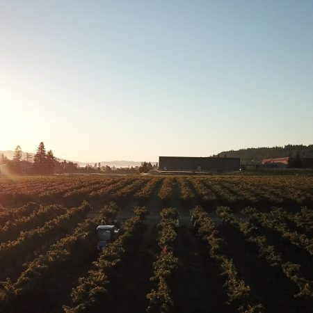Sky view of vineyard at Pigoni ranch at sunset