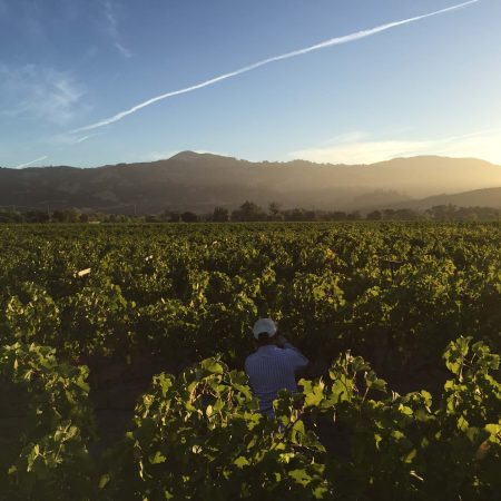 Frei vineyard merlot vines