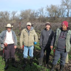 Harvesters in the field