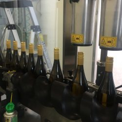 bottles with new corks at processing plant