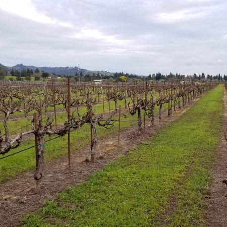 Vines at Smith Ranch
