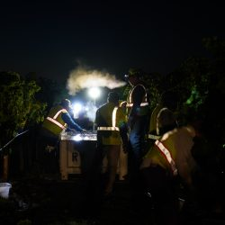 Grapes being harvested at night